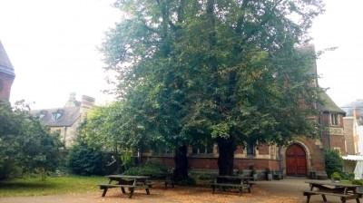 Oxford Union Baum (c) Michael Saliba